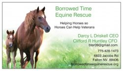 Borrowed Time Equine Rescue